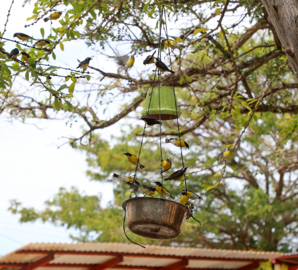 vogels op Bonaire