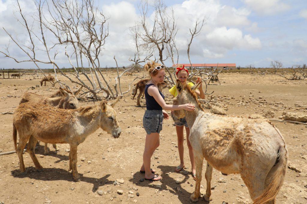 met kinderen naar de ezelopvang
